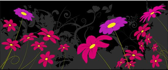 vecteur série - fleur marguerite - fond noir
