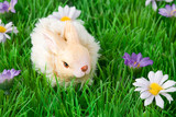 Green field with small flowers and a bunny