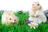 Cute easter bunnies on grass with flowers