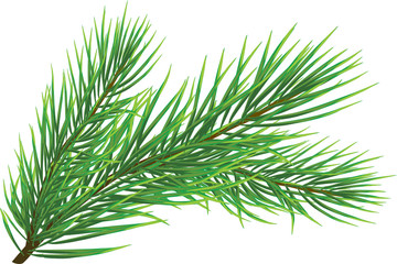 Fir twig - vector