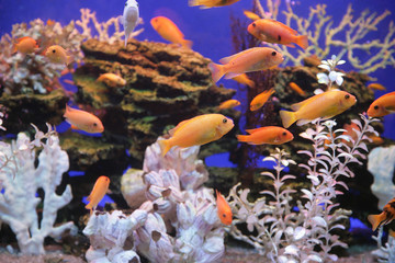 Aquarium with bright small fishes and corals
