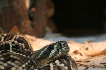 Python - Singapore Zoo, Singapore