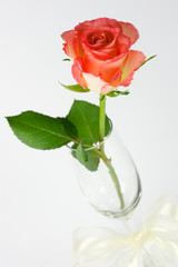 Red rose in a champagne glass