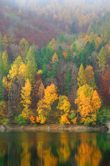 Colorful autumn forest on the river edge