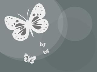Schmetterlinge, Butterfly