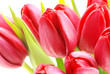 Quadro Rote Tulpen