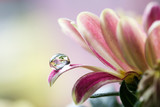 Fototapete Blumenblatt - Petals - Blume