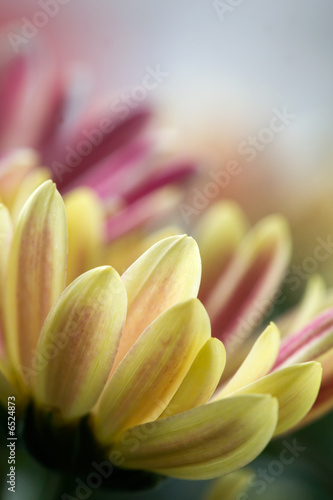 Leinwandbild Motiv Flower