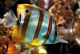 Fototapeta Poisson jaune exotique