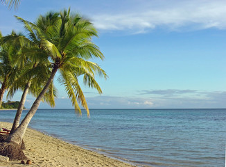 Fijian Beach and Palm Trees