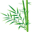 fresh bamboo and leaves on blank