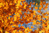 vivid fall trees poster