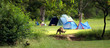 Camping in Australia - 6560688