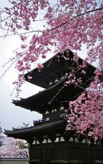 Cherry blossom and pagoda in spring, Nara, Japan