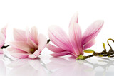 Fototapete Frühling - Natur - Blume