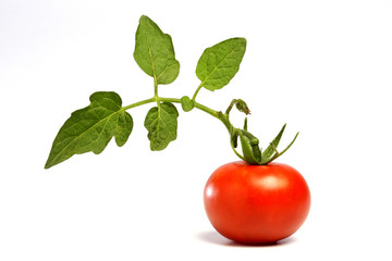 Ripe tomato isolated on white