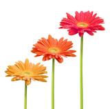 Fleurs colorées - 6585207