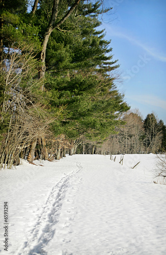 snowy forest path