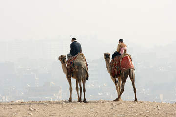 two bedouin nomad on camels