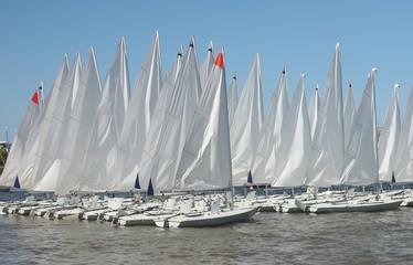 Fleet of moored up sailing boats