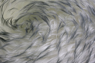 lambskin - fur background with a vortex pattern