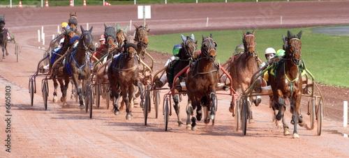 Foto op Plexiglas Paardrijden courses