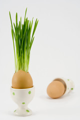 the egg with growing grass