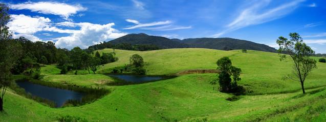 Lush Field Panorama