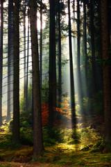 Waldes-Licht