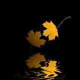 Golden Leaf Reflection poster