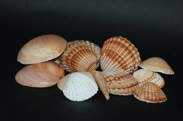 Seashell group