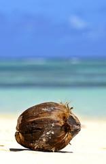 Coco on the seacoast