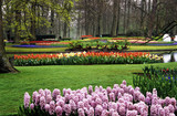 Fototapety Hyacinths and Tulips at Keukenhof