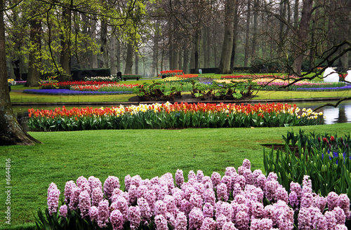 Hyacinths and Tulips at Keukenhof