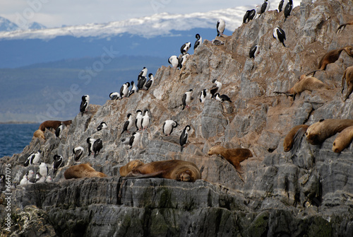 Relaxing sealions and sea birds.