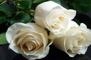three white roses on black background