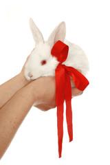 bunny sugar