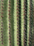 Saguaro Cactus Up Close