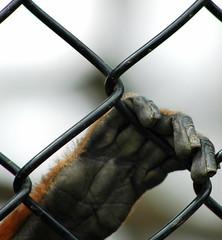 Monkey Hand