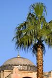 Hagia Sophia and palm tree, Istanbul, Turkey poster