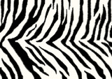 Texture - a fluffy skin of a zebra poster