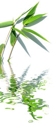 reflets de feuilles