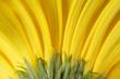 Fototapete Linie - Blütenblätter - Blume