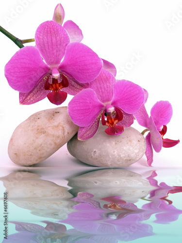 canvas print picture Wasser,Orchidee
