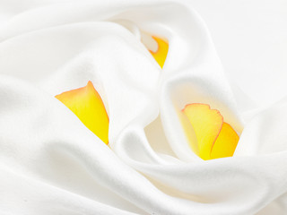 yellow petals in white satin cloth
