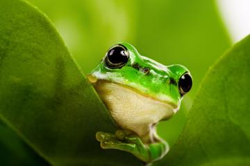 Frog peeking out
