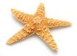 Starfish - 6761431