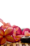 Fototapety Frangipani and polished stone