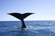 baleine valdes
