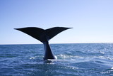 Fototapete Meer - Ozean - Meeressäuger